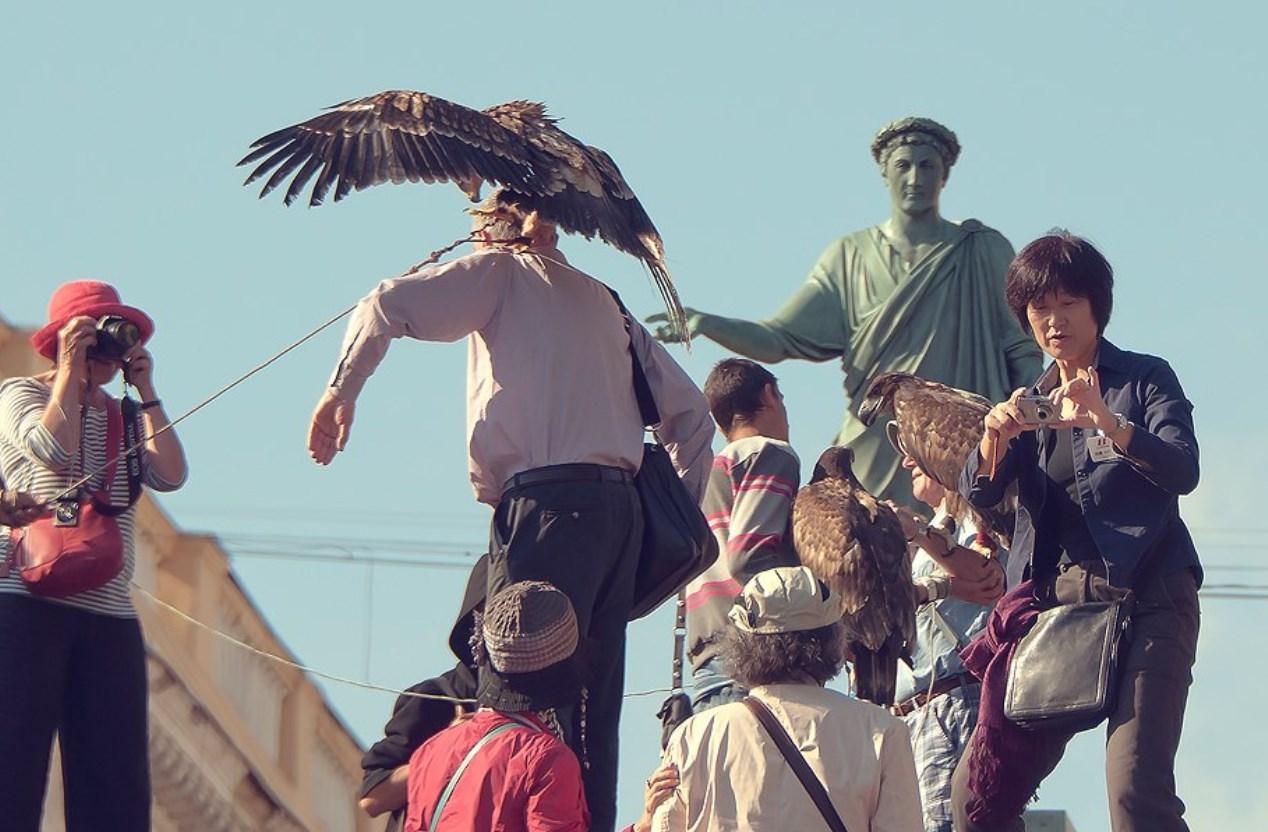 Издевательства над краснокнижными птицами на Приморском бульваре продолжаются «фото»