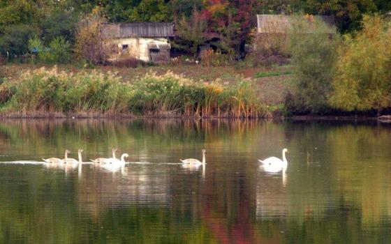 Новые сельские. Блог «понаехавшей» из города в деревню «фото»