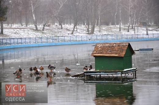 Одесский горсовет: хождение по льду прудов парка Победы опасно для жизни «фото»