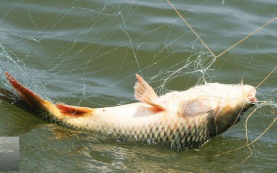 На Тузловских лиманах браконьеры работали по лицензии (скриншот) «фото»