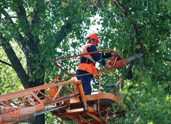 Мэрия предупреждает: в центре Одессы будет проводиться обрезка деревьев «фото»
