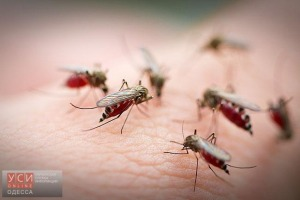 mosquito-pic668-668x444-71641