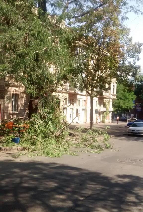 Фотофакт: в центре Одессы на летнюю площадку кафе обрушилась ветка «фото»