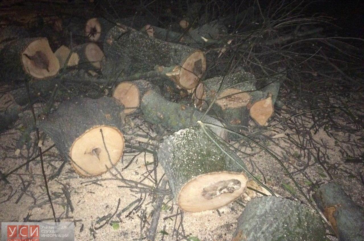 В Преображенском парке вырубили деревья возле строящегося храма (фото) «фото»