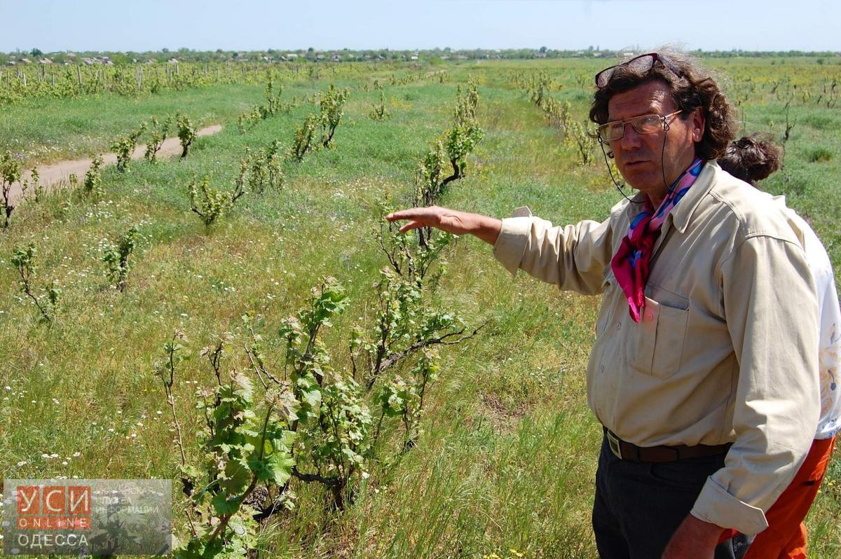 Под Одессой рейдеры бульдозером уничтожили виноградники французского винодела