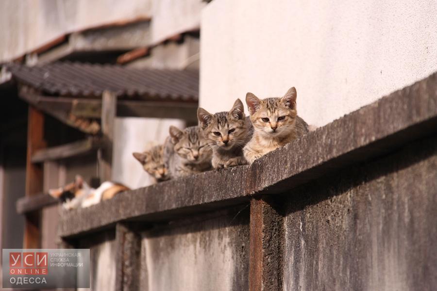 В Одессе бездомных кошек можно бесплатно стерилизовать