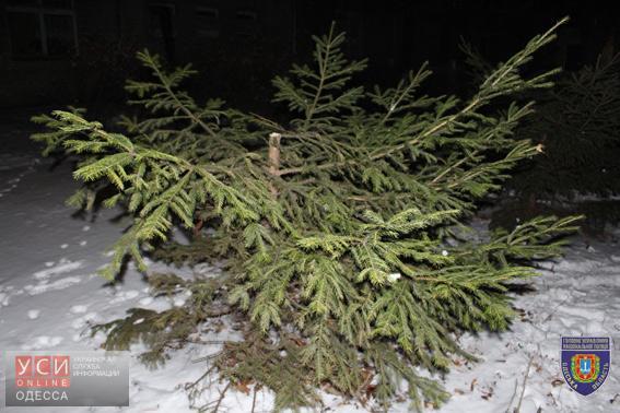 ВОдесской области задержали лиц, спиливших елки натерритории клиники