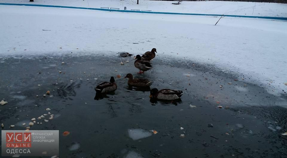 В одесском парке заботятся о зимовке рыб, черепах и уток (фото)