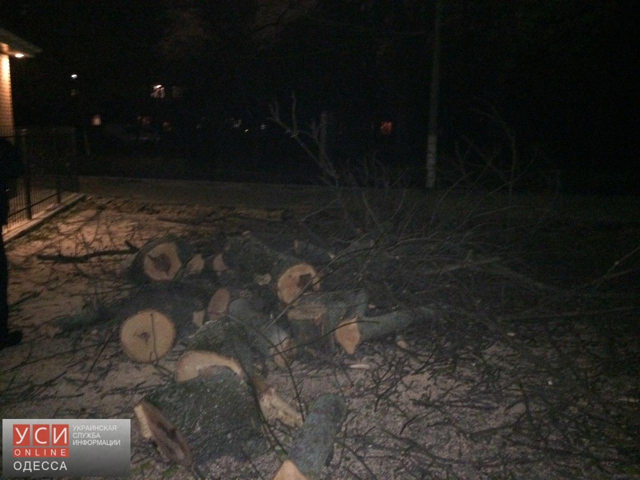 Активисты организовывают дежурства в Преображенском парке, чтобы помешать коммунальщикам срезать здоровые деревья