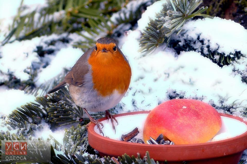 Одесситов зовут на акцию «Давай покормим птиц»