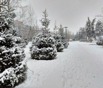Одессу накрыл пушистый и мягкий снег