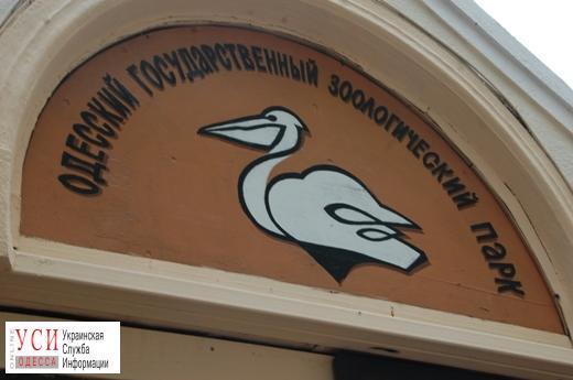 Масштабную реконструкцию одесского зоопарка отложили: программу корректируют «фото»