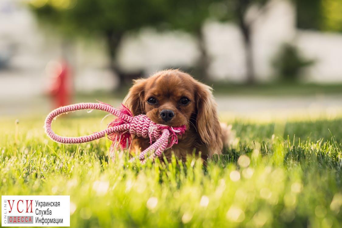 В Одессе потратят 700 тысяч на площадки для выгула собак «фото»