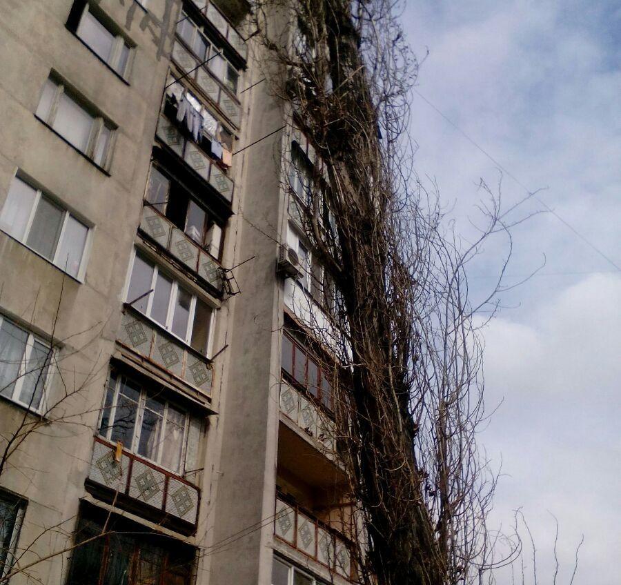В Одессе огромный тополь угрожает жителям многоэтажки «фото»