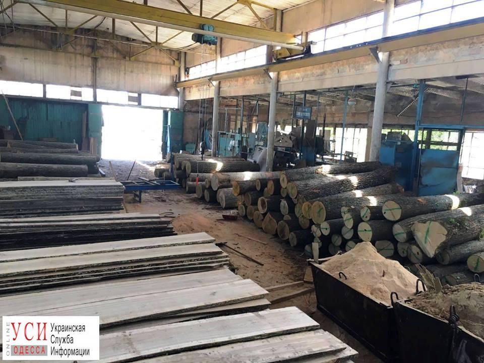 В Одесской области уничтожают лес, ущерб оценили в 10 миллионов (фото) «фото»