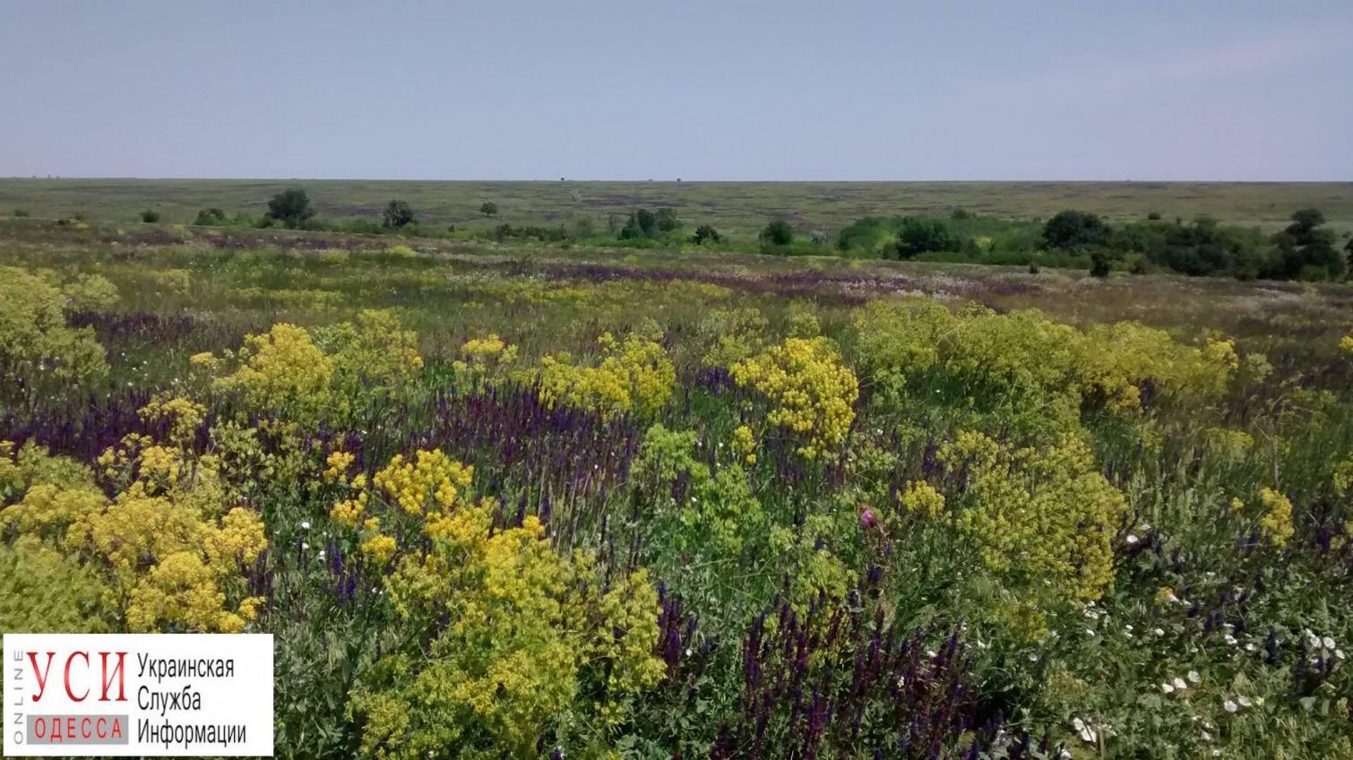 Одесский эколог Русев выступил против идеи создать заказник на территории Тарутинской степи «фото»