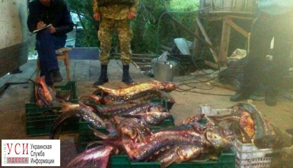 Одесская область: у браконьеров обнаружили более сотни килограммов краснокнижной рыбы «фото»