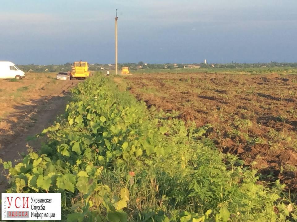 В Шабо снова начали уничтожать виноградники французского винодела (фото) «фото»