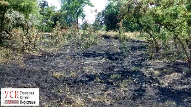 На Лузановке произошел масштабный пожар (фото) «фото»