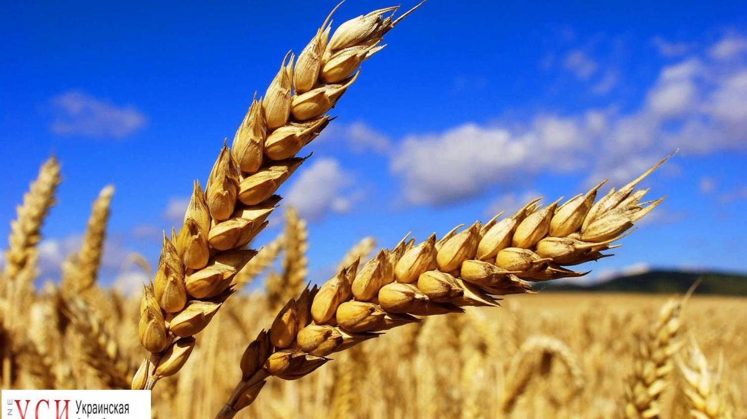 В Одесской области не хватает комбайнов, чтобы собрать урожай зерновых «фото»