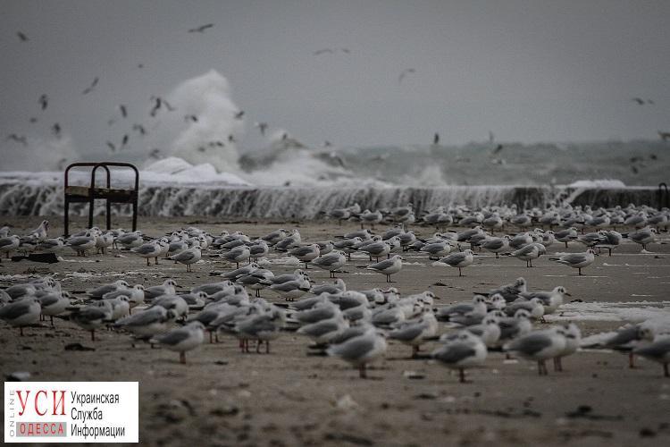 Сила стихии: на одесском побережье мощный шторм (фоторепортаж) «фото»