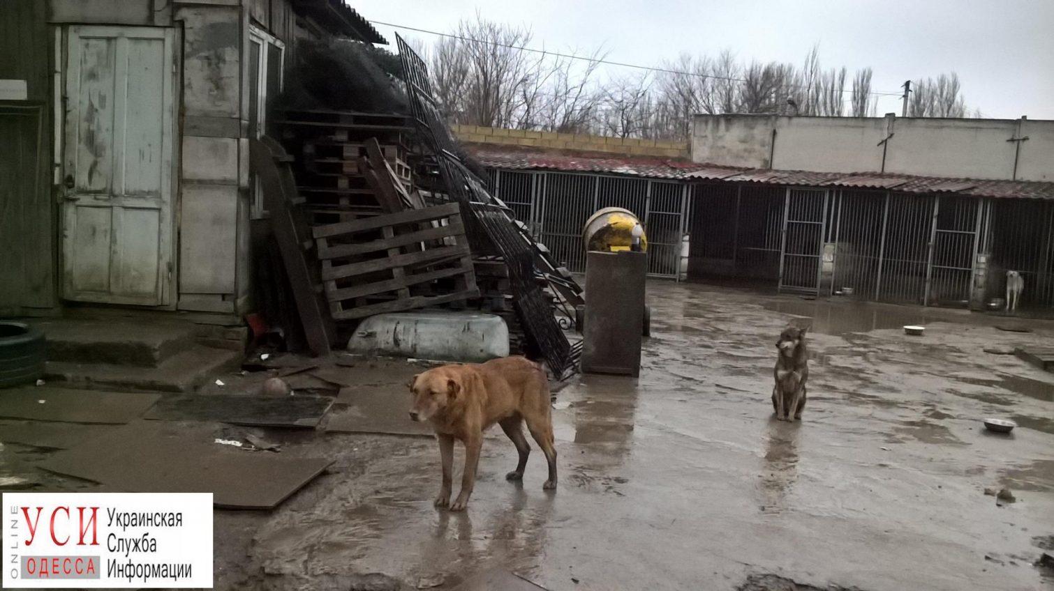 Одесситы собирают стройматериалы на ремонт приюта «Ковчег» «фото»