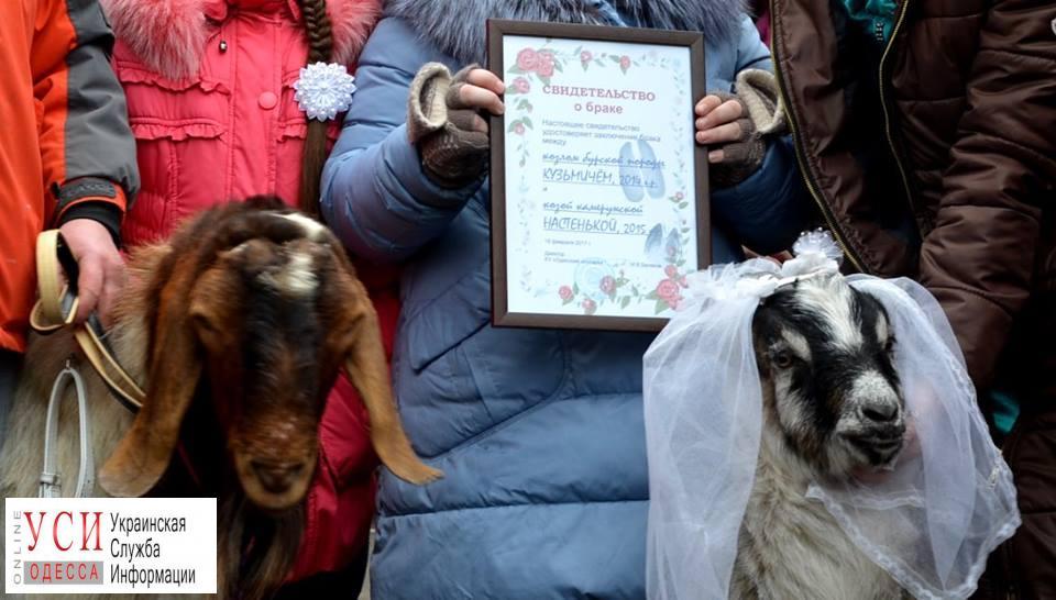 В Одесском зоопарке выберут пару года «фото»