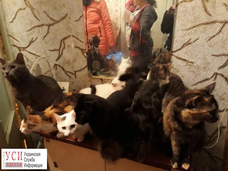 100 одесских котов ищут новый дом и любящих хозяев «фото»