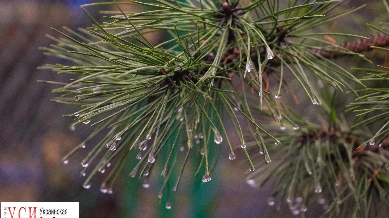 Дождливая Одесса: лужи и совсем не зимняя атмосфера (фото) «фото»