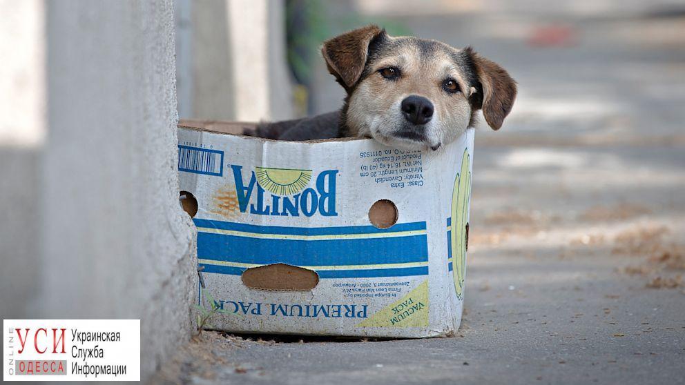 Человек собаке друг: как в Одессе сокращают число бездомных собак «фото»