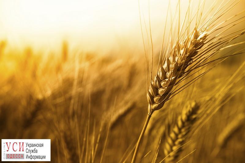 В Одесской области засуха: ожидается рекордно низкий урожай «фото»