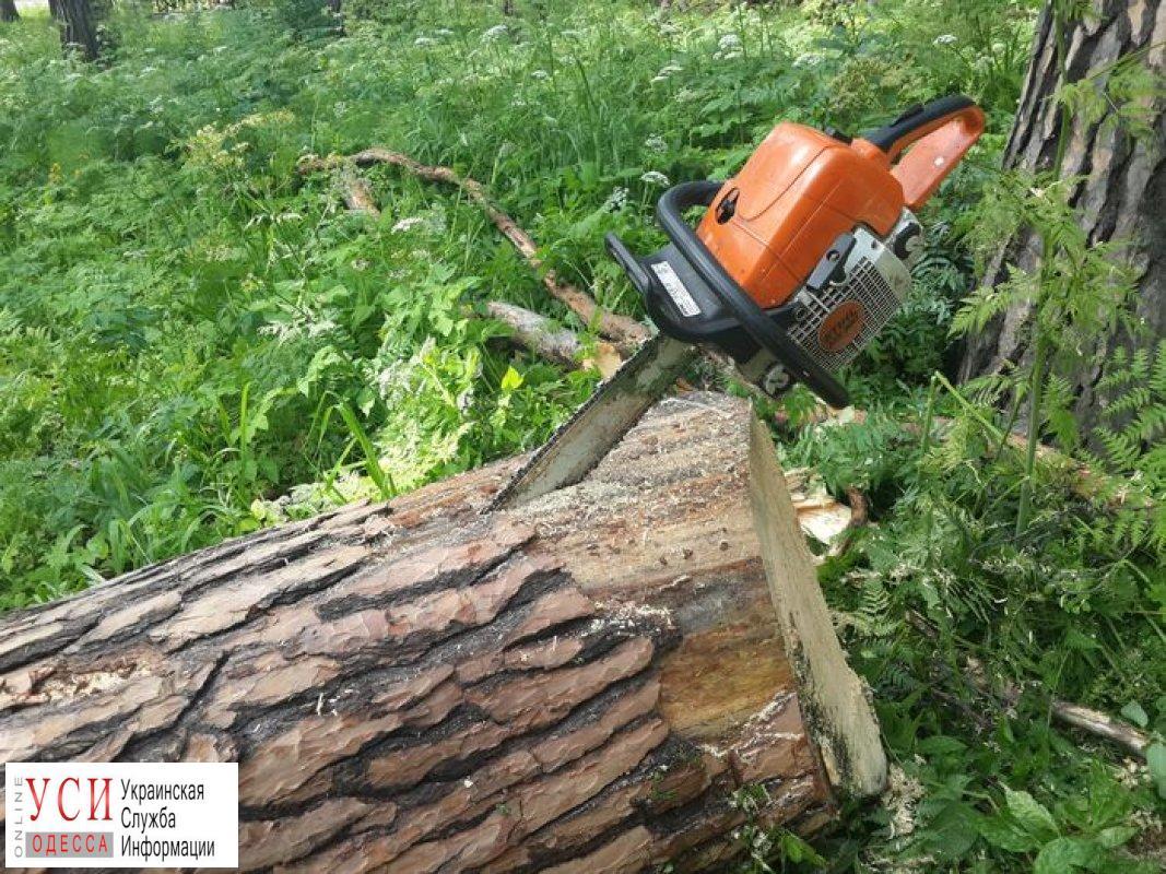 На Княжеской обрушилось дерево «фото»