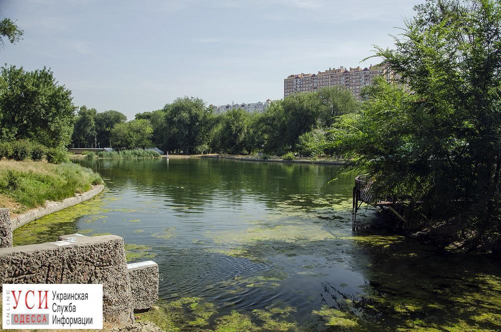 Летний Дюковский: как выглядит парк на границе Молдаванки и Слободки (фоторепортаж) «фото»