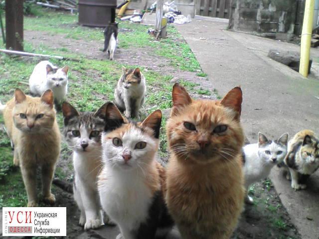 В Одессе заработала программа по осмотру и стерилизации дворовых котов «фото»