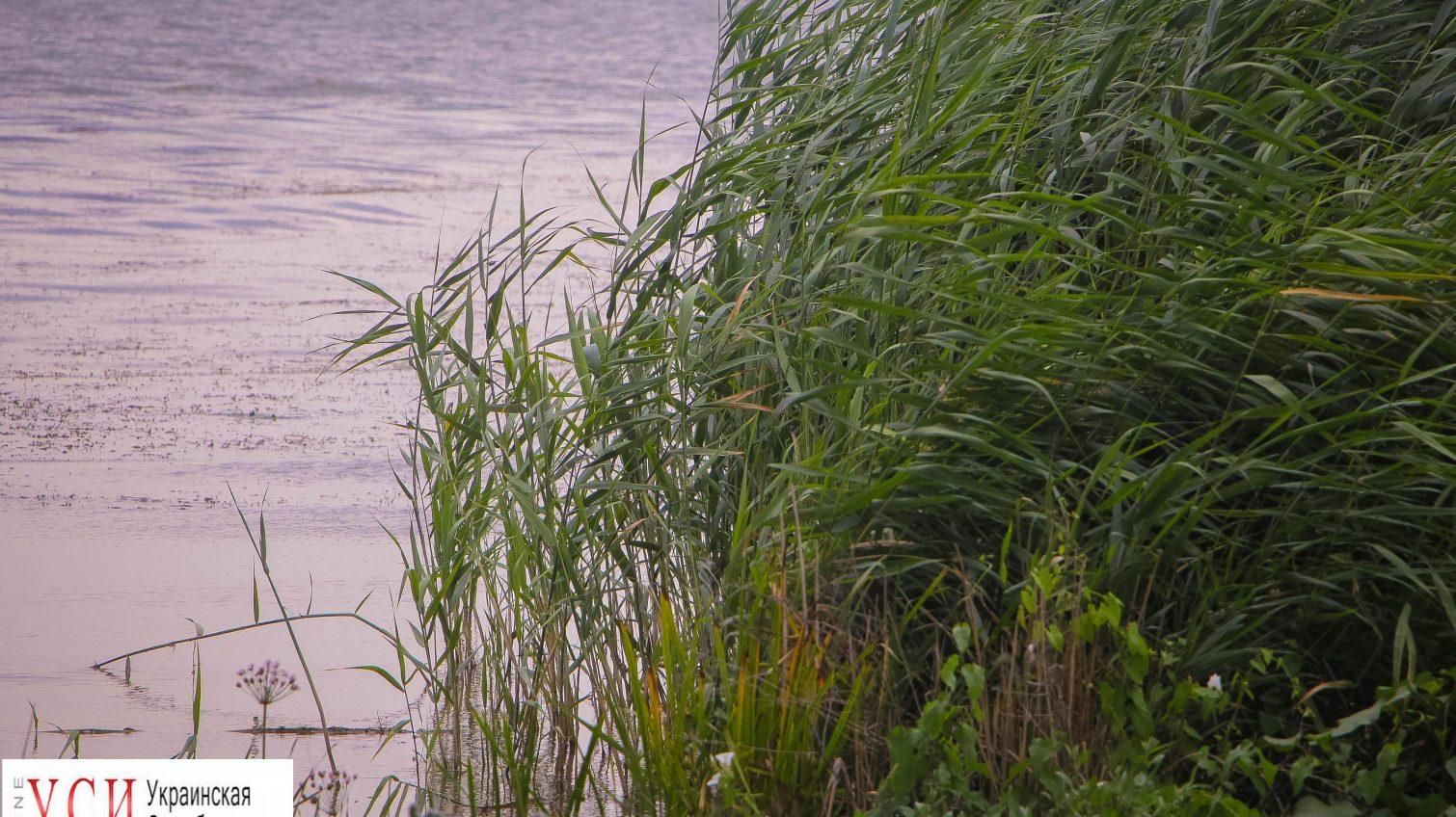 На Днестровском лимане пропал ребенок: его ищут водолазы «фото»