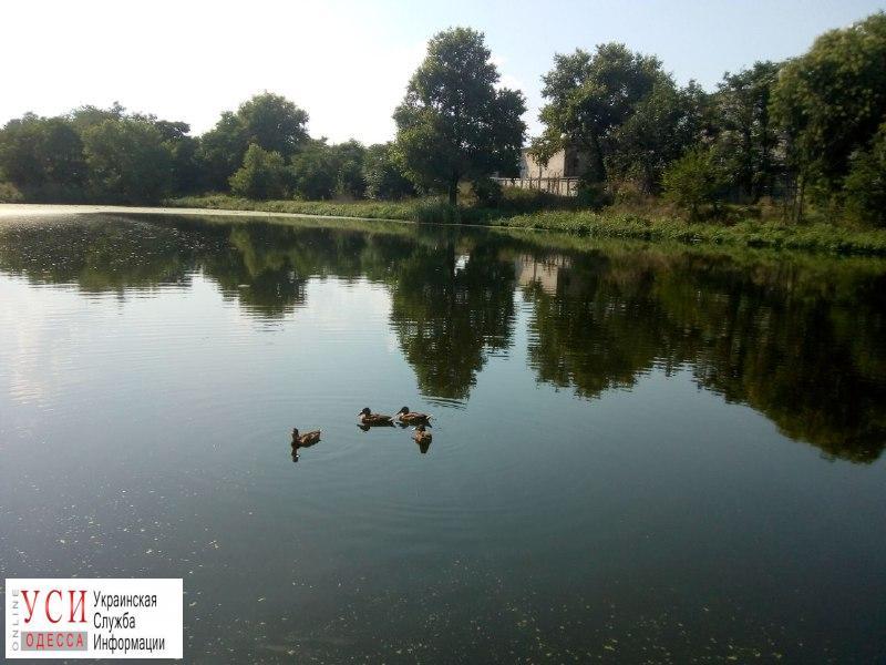 В заброшенном пруду Джутовой фабрики завелись утки (фоторепортаж) «фото»