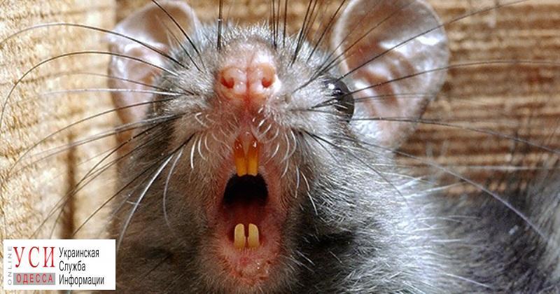 В ресторане у Оперного женщину укусила крыса – администрация крысу не признала (документ) «фото»
