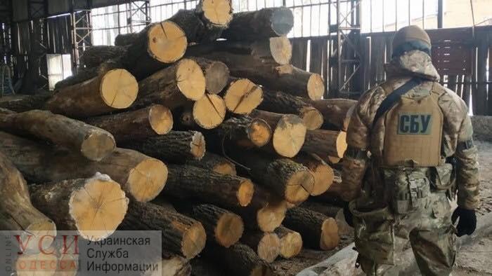 СБУ прекратила в Одесской области кражу древесины на 1,5 миллиона гривен каждый месяц (фото) «фото»