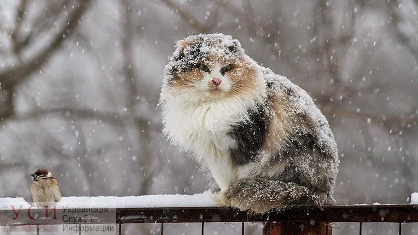 Одессе второй день будет идти снег «фото»