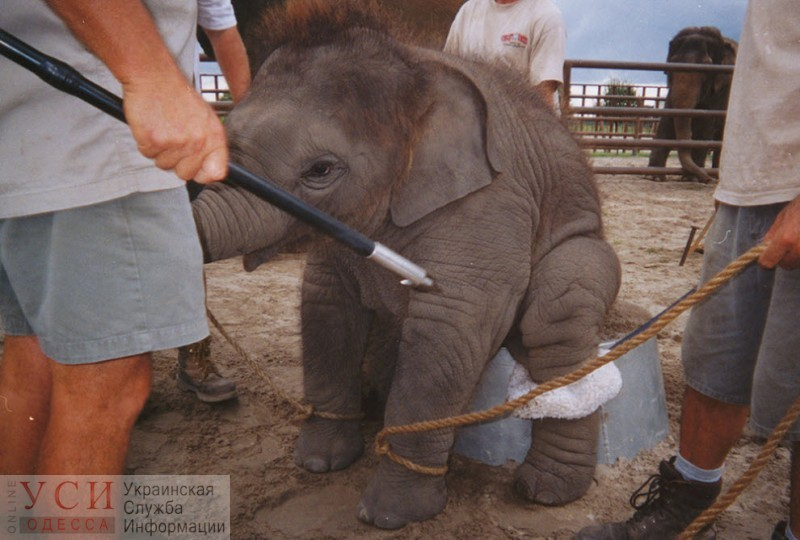 В одесских цирках больше не смогут эксплуатировать диких животных: такой законопроект утвердили в Кабмине «фото»