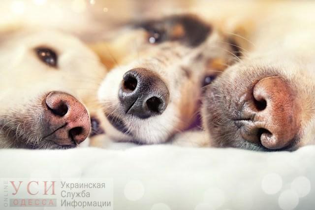 В Одессе будет пасмурно и холодно, но без снега «фото»