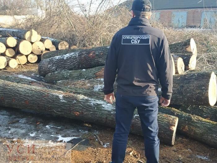 В Одесской области чиновники лесхоза под видом проведения санитарных порубок рубили и продавали лес (фото) «фото»