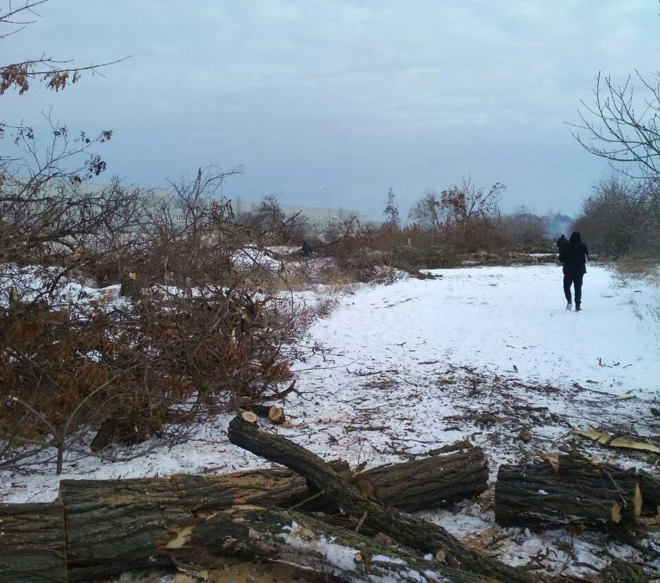 В районе поселка Дачное неизвестные срубили лесополосу (фото) «фото»