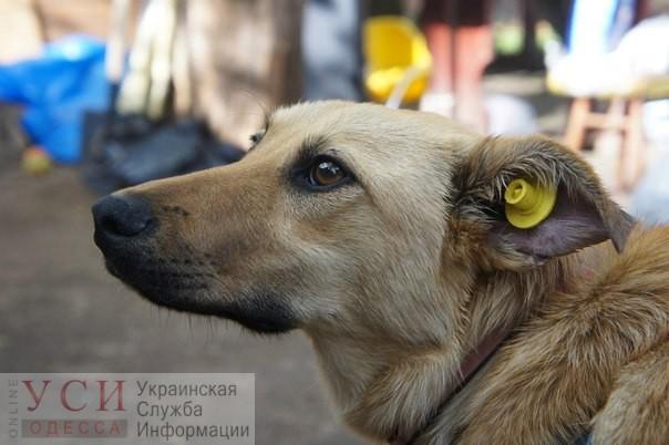 В Суворовском районе планируют стерилизовать и вакцинировать бездомных животных «фото»
