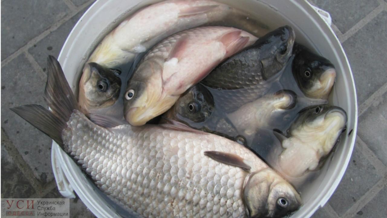 Под Одессой у браконьеров забрали улов и отдали в дом престарелых «фото»