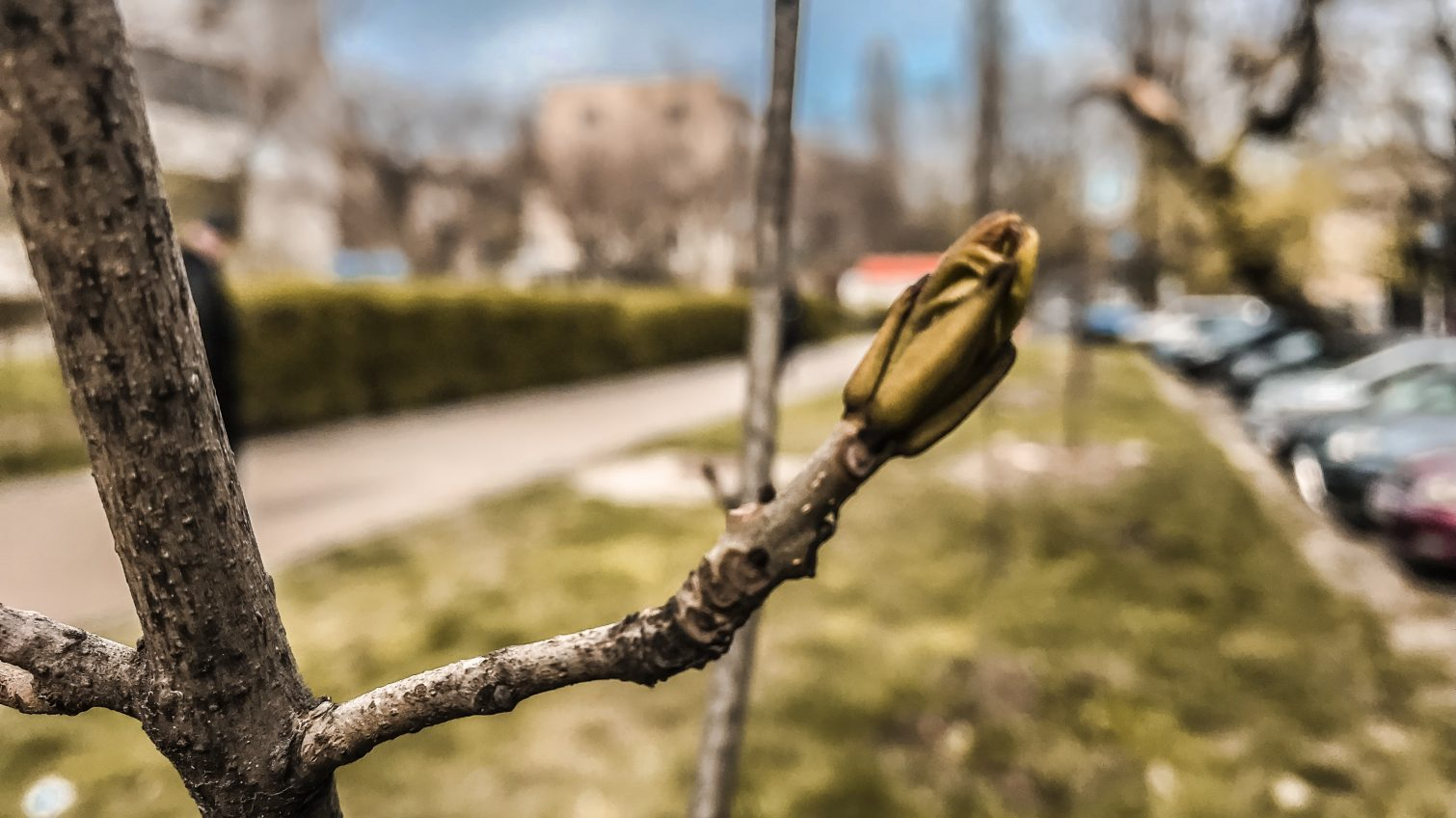 В Одессе появились две новые аллеи: жители города высадили саженцы «Райских» яблонь и дубов (фото) «фото»