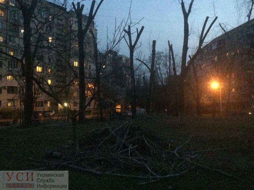 На Таирова неизвестные обрезали деревья до состояния столбов (фото) «фото»