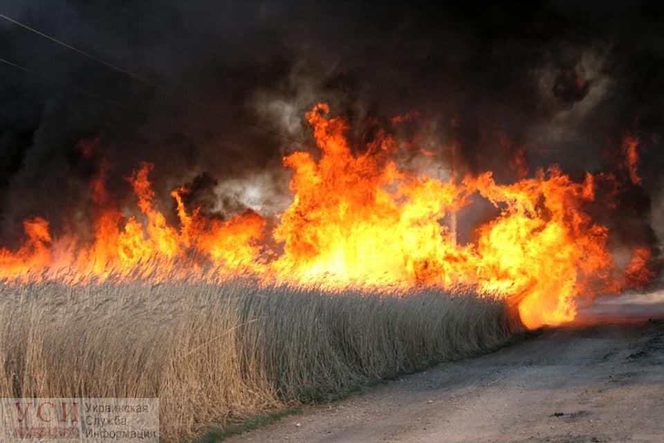 Тузловские лиманы в огне: пламя уничтожило более 25 гектаров на территории заповедника (фото, видео) «фото»