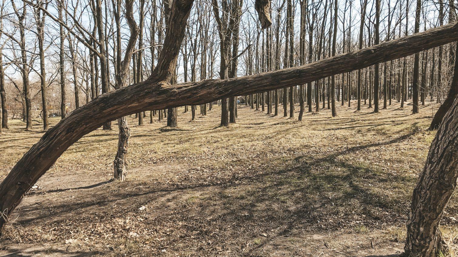 Весна на Мемориале 411-й батареи: снова заработал веревочный городок, детский автопарк и другие развлечения «фото»