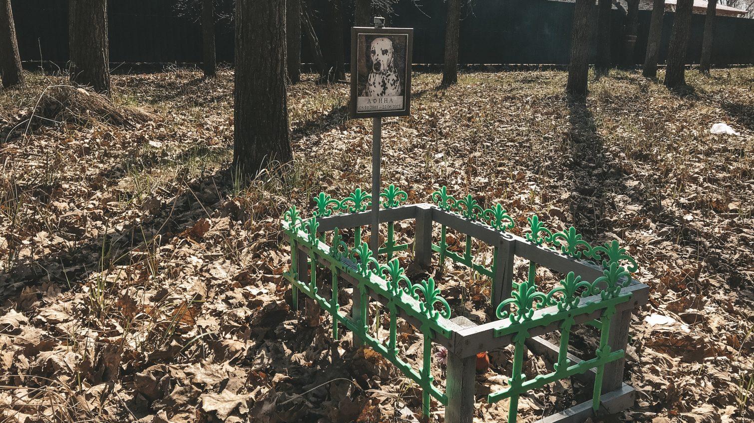 Кладбище домашних животных на 411-й батарее продолжает разрастаться (фото) «фото»